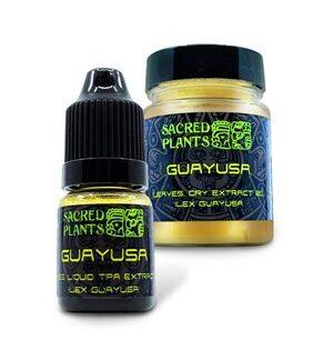 Guayusa